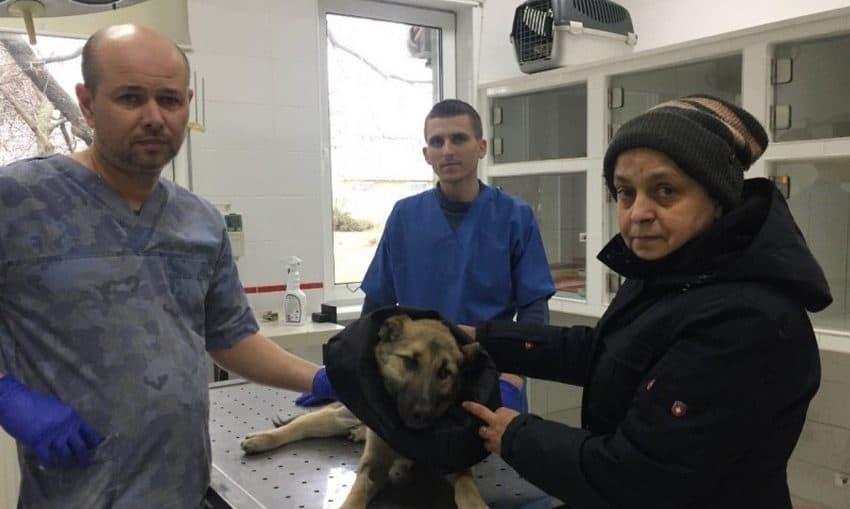 Бориспільські ветеринари