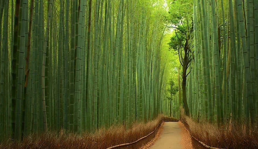 Бамбуковий ліс, Японія