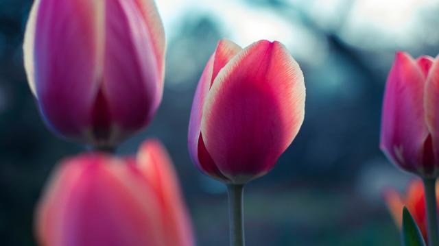 Привітання з 8 березня для мам у віршах